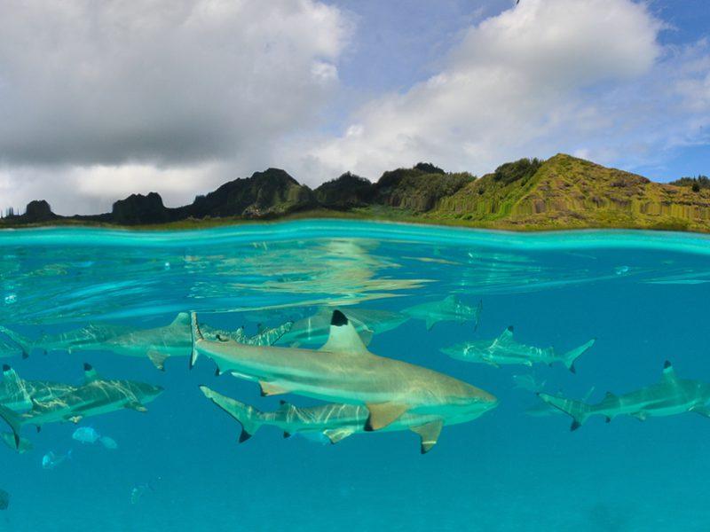 Moorea Shark and Ray
